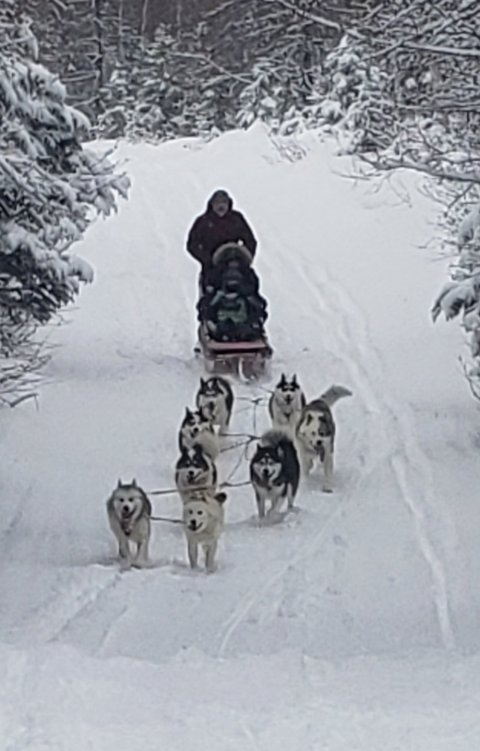 Northern Lights Dog Sledding